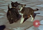 Image of Adolf Hitler's dogs Berchtesgaden Germany, 1940, second 11 stock footage video 65675047969