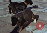 Image of Adolf Hitler's dogs Berchtesgaden Germany, 1940, second 12 stock footage video 65675047969