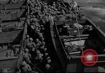 Image of United States Marines Pacific Theater, 1943, second 9 stock footage video 65675048159