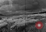 Image of Korean livestock industry North Korea, 1947, second 2 stock footage video 65675048309