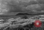 Image of Korean livestock industry North Korea, 1947, second 4 stock footage video 65675048309