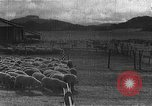 Image of Korean livestock industry North Korea, 1947, second 8 stock footage video 65675048309