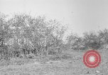 Image of AEF training with small mountain gun France, 1918, second 1 stock footage video 65675048416