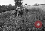 Image of scythe United States USA, 1917, second 9 stock footage video 65675048440