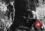 Image of lumbering United States USA, 1917, second 5 stock footage video 65675048519