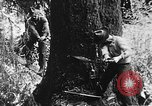 Image of lumbering United States USA, 1917, second 8 stock footage video 65675048519