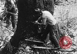 Image of lumbering United States USA, 1917, second 12 stock footage video 65675048519