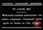 Image of Zebra driven carriage Saint Louis Missouri USA, 1931, second 8 stock footage video 65675048705