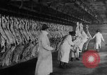 Image of animal skin United States USA, 1917, second 7 stock footage video 65675048741