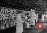 Image of animal skin United States USA, 1917, second 8 stock footage video 65675048741