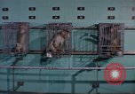 Image of monkeys Washington DC USA, 1965, second 12 stock footage video 65675048921