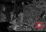 Image of Soviet Forces Kuban Soviet Union, 1944, second 10 stock footage video 65675049252