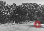 Image of Italian Quartermaster troops Tunisia North Africa, 1943, second 10 stock footage video 65675049661