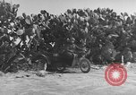 Image of Italian Quartermaster troops Tunisia North Africa, 1943, second 11 stock footage video 65675049661