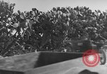 Image of Italian Quartermaster troops Tunisia North Africa, 1943, second 12 stock footage video 65675049661