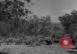 Image of Spanish Civil War Amposta Spain, 1938, second 6 stock footage video 65675049679