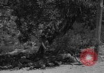Image of Spanish Civil War Amposta Spain, 1938, second 10 stock footage video 65675049679