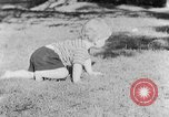 Image of small boy Kentucky United States USA, 1940, second 11 stock footage video 65675050014
