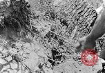 Image of pile of brush Tennessee United States USA, 1940, second 1 stock footage video 65675050022