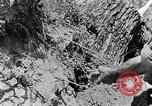 Image of pile of brush Tennessee United States USA, 1940, second 2 stock footage video 65675050022