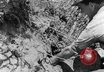 Image of pile of brush Tennessee United States USA, 1940, second 3 stock footage video 65675050022