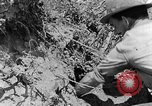 Image of pile of brush Tennessee United States USA, 1940, second 5 stock footage video 65675050022