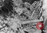 Image of pile of brush Tennessee United States USA, 1940, second 7 stock footage video 65675050022
