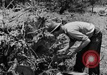Image of pile of brush Tennessee United States USA, 1940, second 9 stock footage video 65675050022