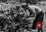 Image of pile of brush Tennessee United States USA, 1940, second 10 stock footage video 65675050022