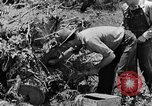 Image of pile of brush Tennessee United States USA, 1940, second 12 stock footage video 65675050022
