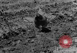 Image of plowing field Calhoun Alabama USA, 1940, second 2 stock footage video 65675050035