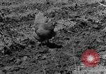 Image of plowing field Calhoun Alabama USA, 1940, second 3 stock footage video 65675050035