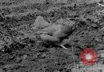 Image of plowing field Calhoun Alabama USA, 1940, second 4 stock footage video 65675050035