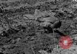 Image of plowing field Calhoun Alabama USA, 1940, second 5 stock footage video 65675050035