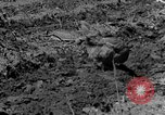 Image of plowing field Calhoun Alabama USA, 1940, second 6 stock footage video 65675050035