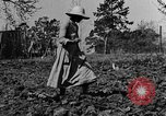 Image of mule drawn plow Calhoun Alabama USA, 1940, second 2 stock footage video 65675050043