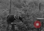 Image of fir trees Washington State United States USA, 1938, second 5 stock footage video 65675050145