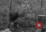 Image of fir trees Washington State United States USA, 1938, second 6 stock footage video 65675050145