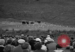 Image of Grizzly bears Wyoming United States USA, 1936, second 11 stock footage video 65675050299
