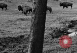 Image of Bisons Wyoming United States USA, 1936, second 7 stock footage video 65675050302