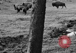 Image of Bisons Wyoming United States USA, 1936, second 8 stock footage video 65675050302