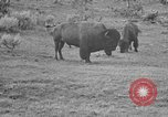 Image of Bisons Wyoming United States USA, 1936, second 10 stock footage video 65675050302