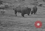 Image of Bisons Wyoming United States USA, 1936, second 11 stock footage video 65675050302