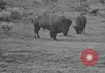 Image of Bisons Wyoming United States USA, 1936, second 12 stock footage video 65675050302