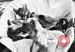 Image of lion cubs Petaluma California USA, 1929, second 3 stock footage video 65675050356