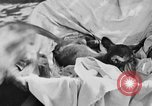 Image of lion cubs Petaluma California USA, 1929, second 11 stock footage video 65675050356