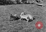 Image of lion cubs Petaluma California USA, 1929, second 12 stock footage video 65675050356