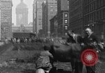 Image of milking a cow New York United States USA, 1929, second 1 stock footage video 65675050358