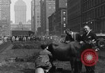 Image of milking a cow New York United States USA, 1929, second 2 stock footage video 65675050358