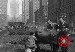 Image of milking a cow New York United States USA, 1929, second 3 stock footage video 65675050358